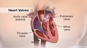 Valve Replacement Hospital in Delhi